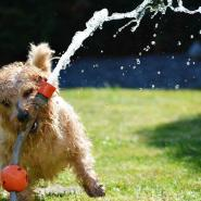 dog playing with water in yard