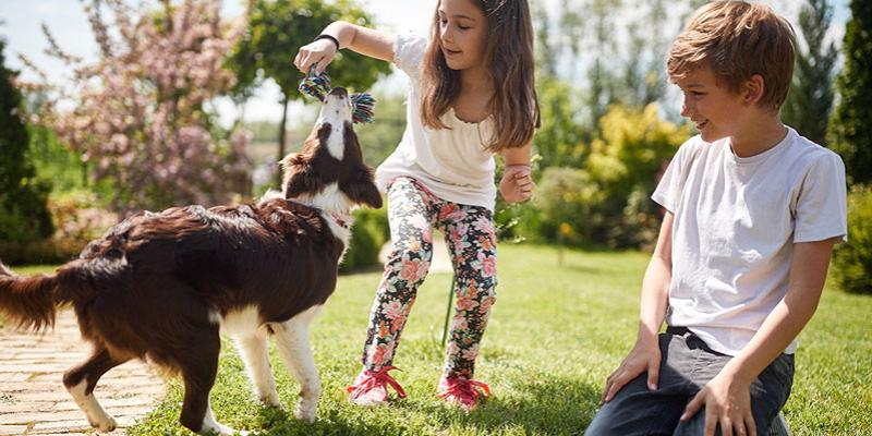 Kids playing with dog